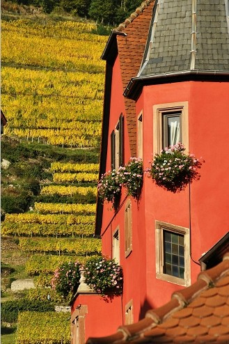 RIBEAUVILLE IN ALSACE