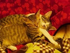 我が家の子猫たち(弁護士水口匠)