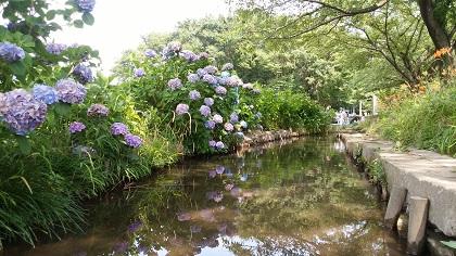 トンボ池(さいたま市)
