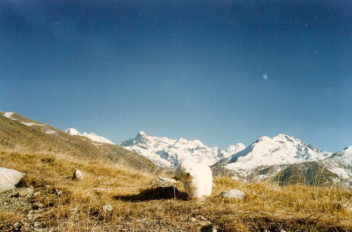 Barcelonnette - F - Agosto 1997 - Ever