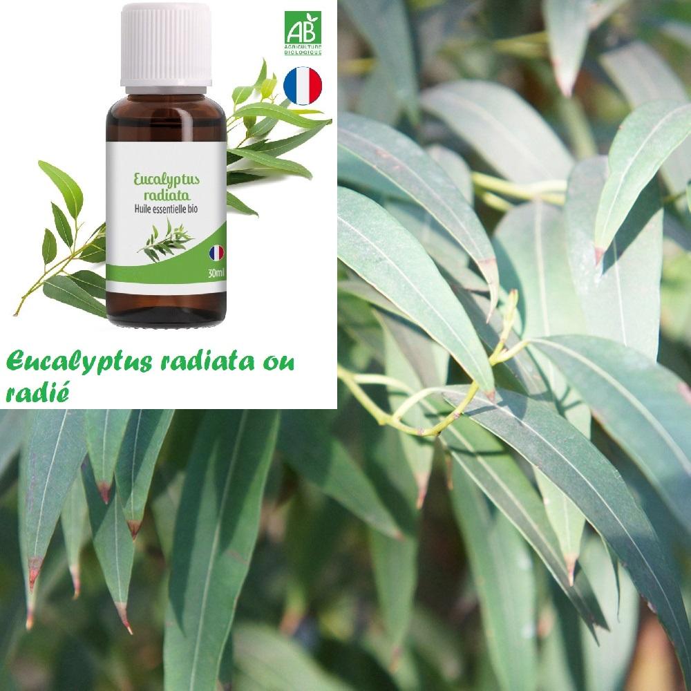 Gel hydroalcoolique : Eucalyptus radié - 10 gouttes