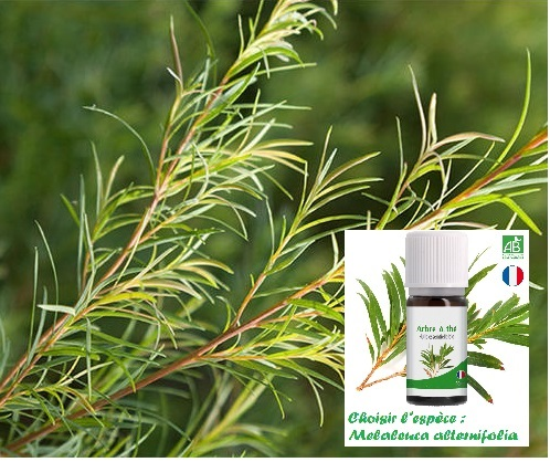 Gel hydroalcoolique : Tea Tree - 20 gouttes