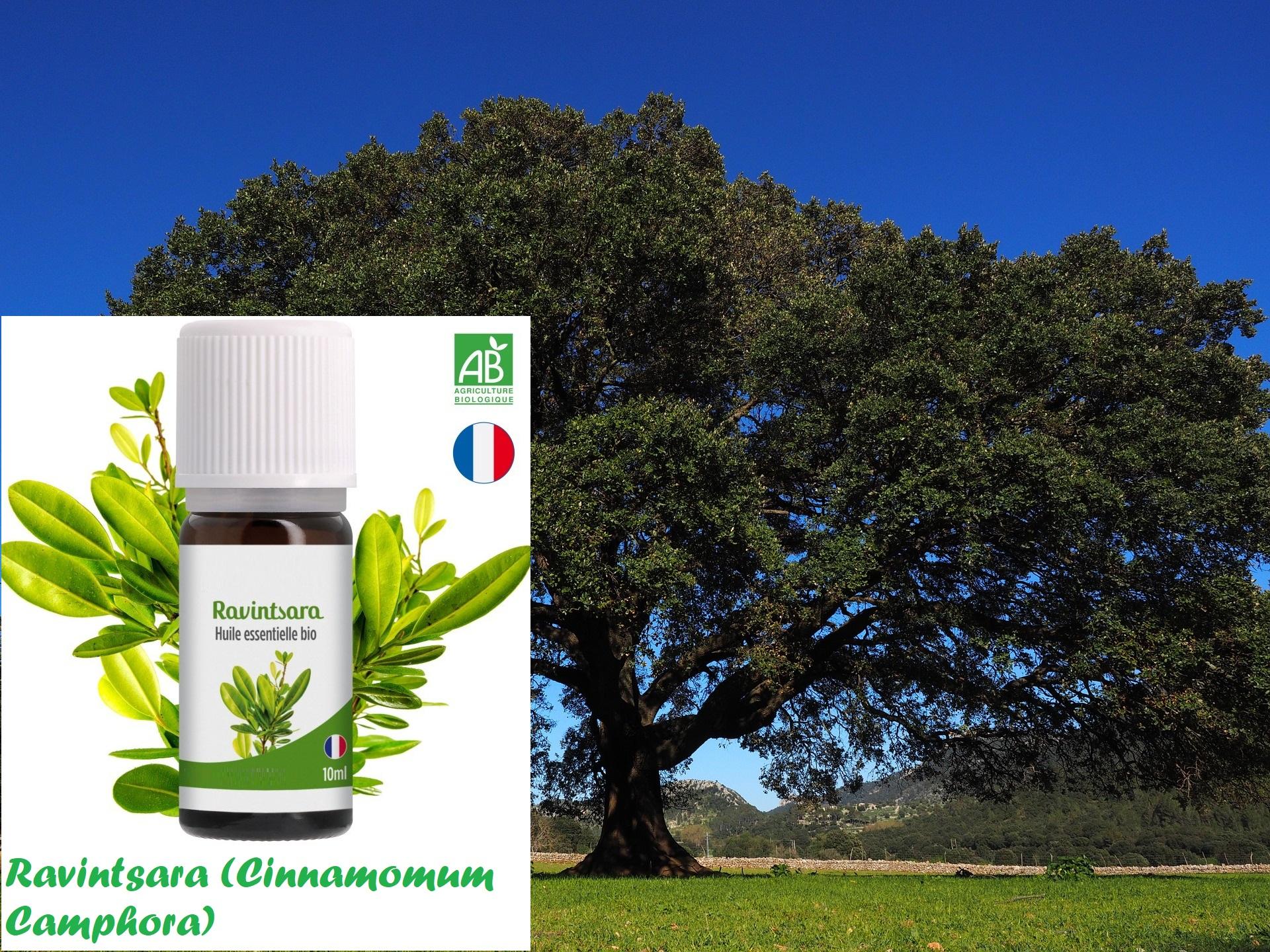 Gel hydroalcoolique : Ravintsara - 20 gouttes