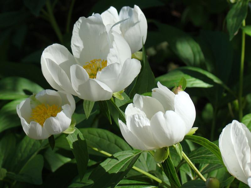 Исходная фотография, сделанная в Ботаническом саду