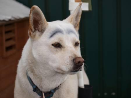 眉毛描かれた犬