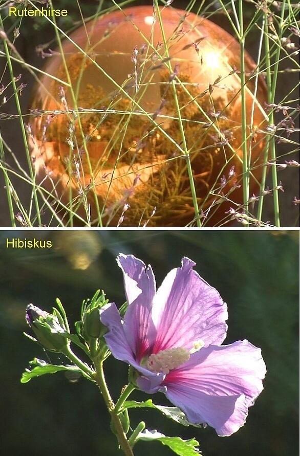 Welches Pflanze möchten Sie am 04.09.18 in einem Video sehen: Zauberhafte Ziergräser wie die Rutenhirse oder exotisch blühender Hibiskus?