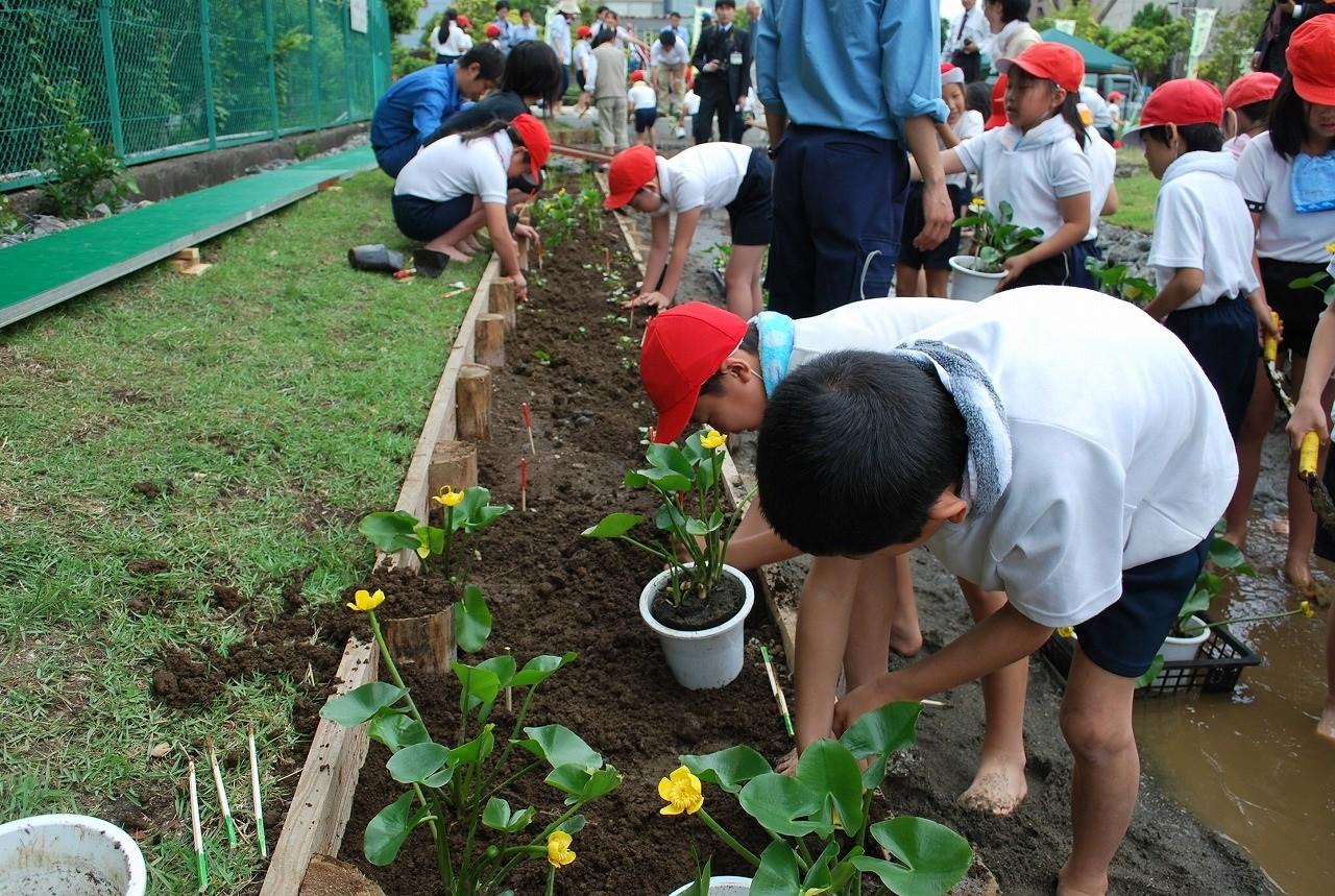 下野谷小、汐入小の3年生による水草植え大作戦(2009年5月22日)