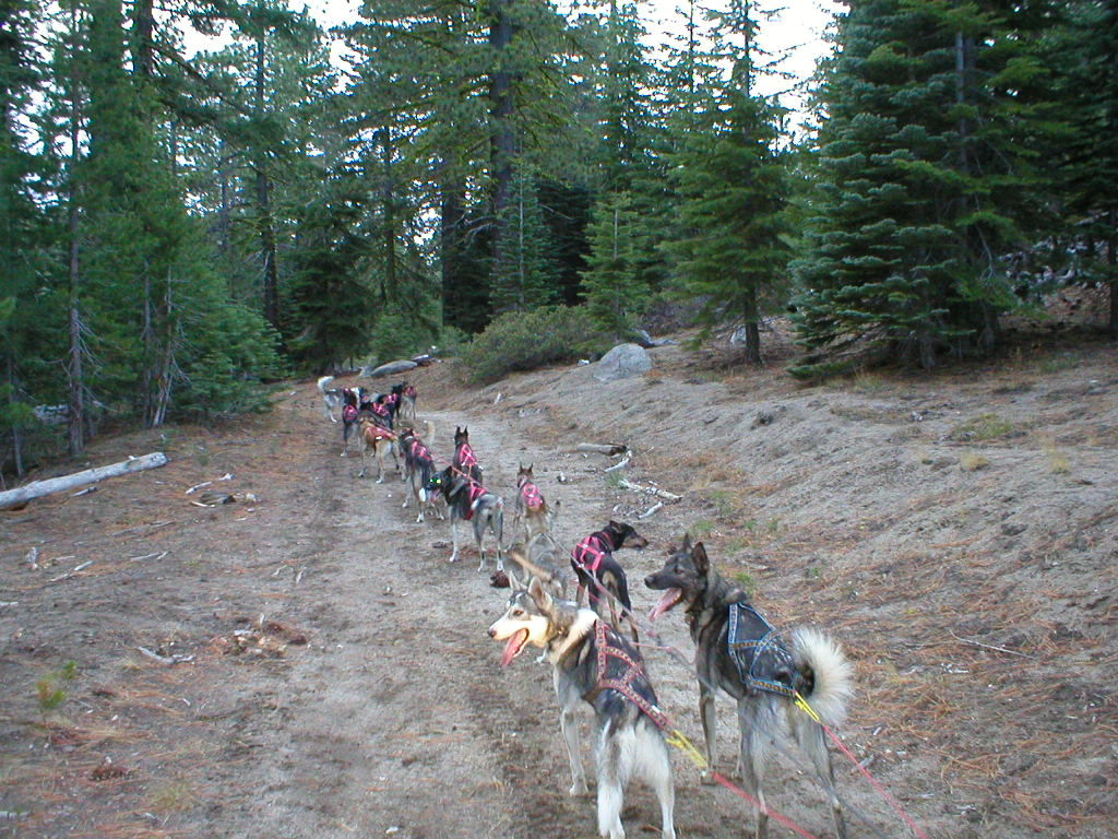 Training in Lassen National Forest