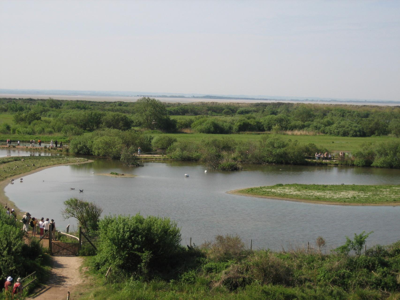 Le parc ornithologique du Marquenterre