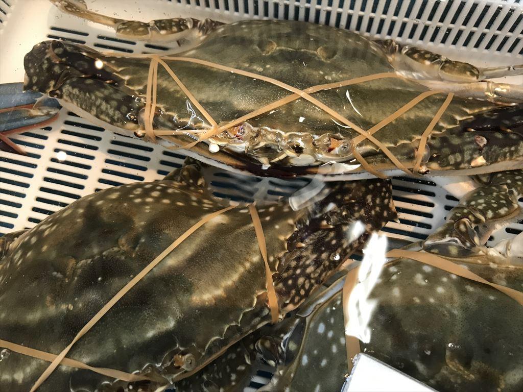 活ワタリ蟹