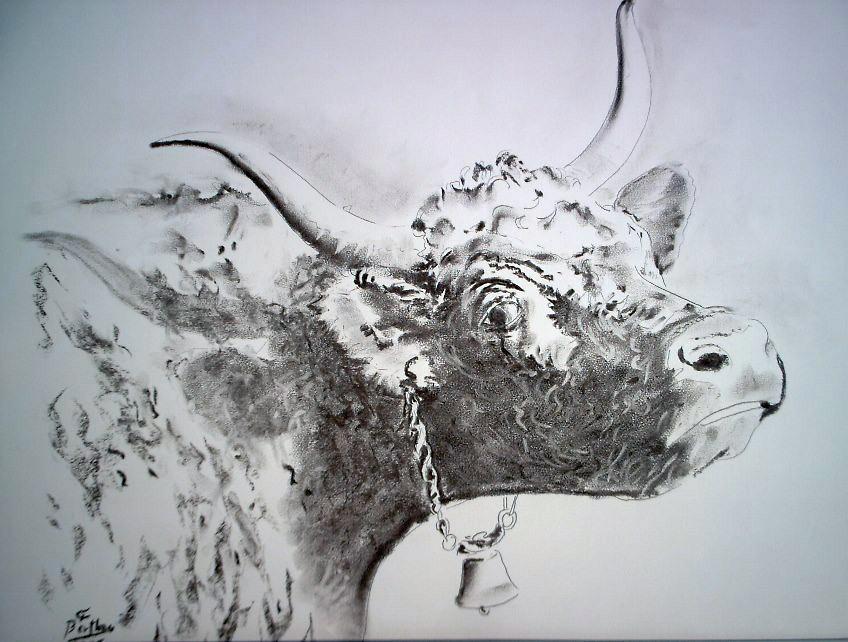 Fusain et crayon- vache salers