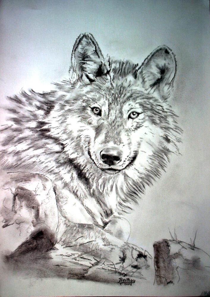 Encre et crayon- le loup