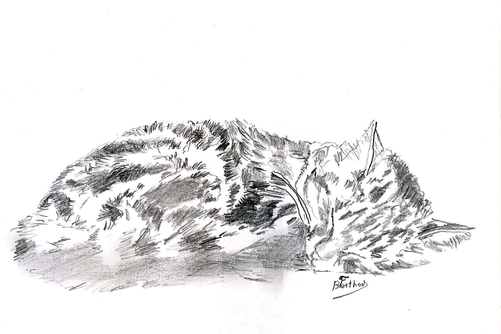 Crayon- le chat 3