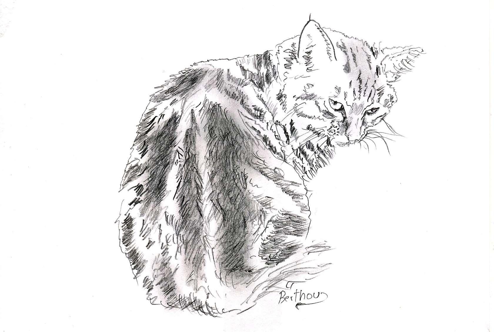 Crayon- le chat 2