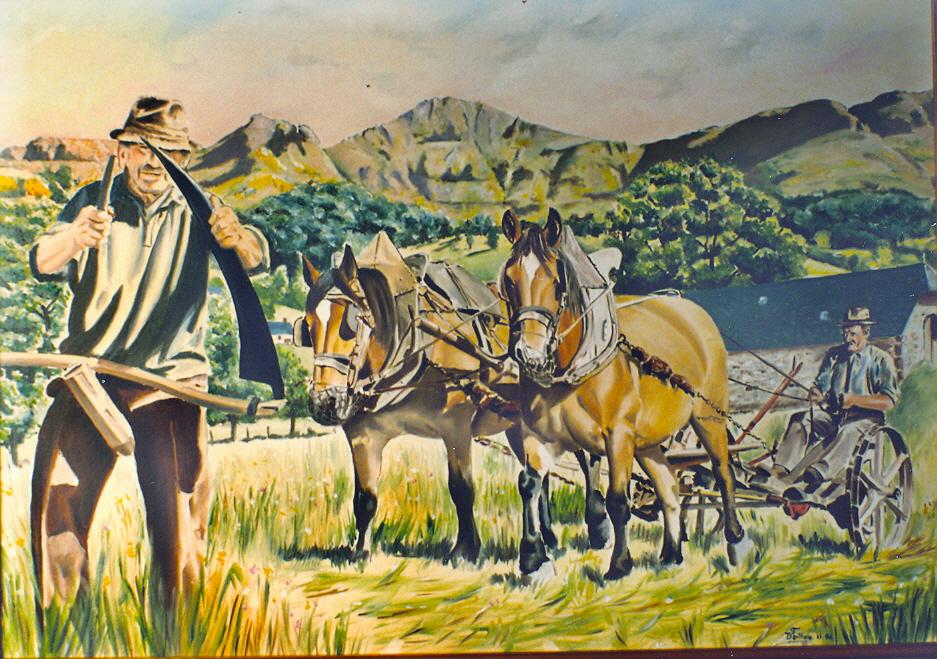 Fauchage, attelage chevaux