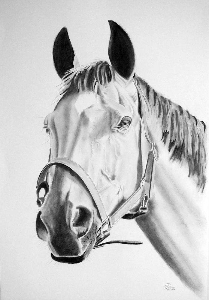 Crayon et fusain-tête de cheval: 102 cm x 70 cm