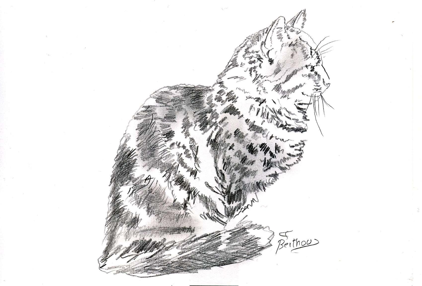 Crayon- Le chat