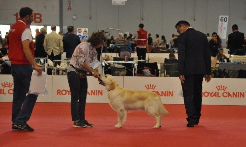 Word Dog Show 2015- Classe giovani
