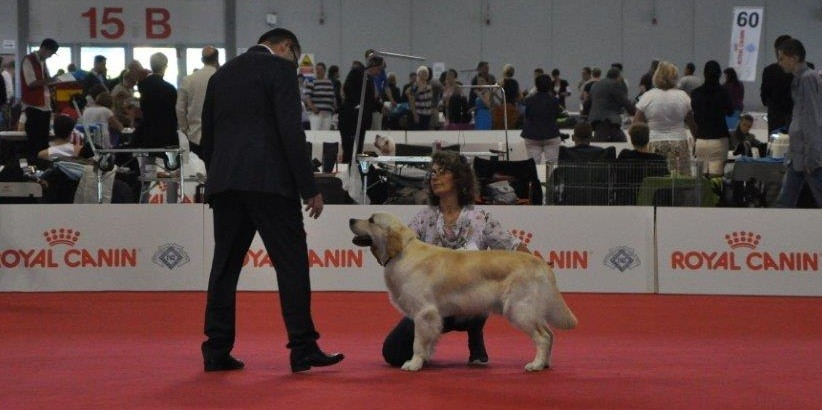 Word Dog Show 2015 - Classe giovani