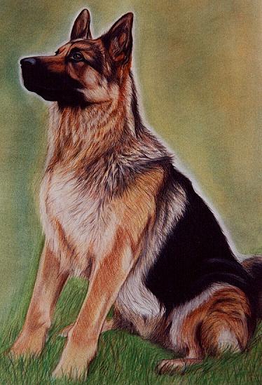 T 2 - Tierbilder Gemälde Tiere - Hundeportrait Zeichnung