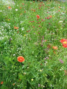 Blühflächen in Puchheim-Bhf. (C) Anna Barnsteiner