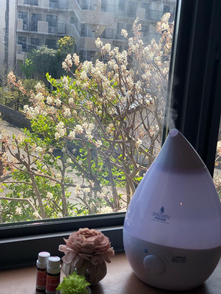 本日のサロンの窓から〜♪ジューンベリーの樹が花盛りです♪
