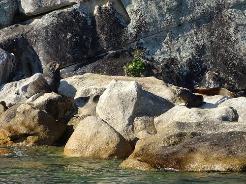 2017.10.3 ひなたぼっこ in Abel Tasuman National Park