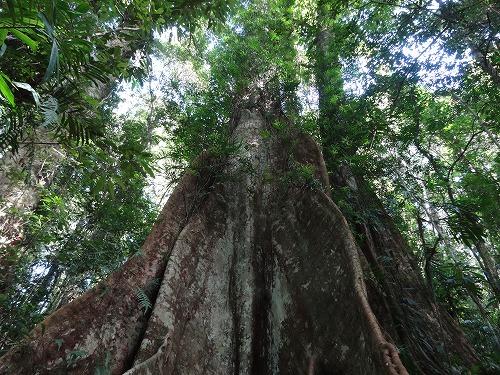 2017.7.30 Rain Forestを歩く