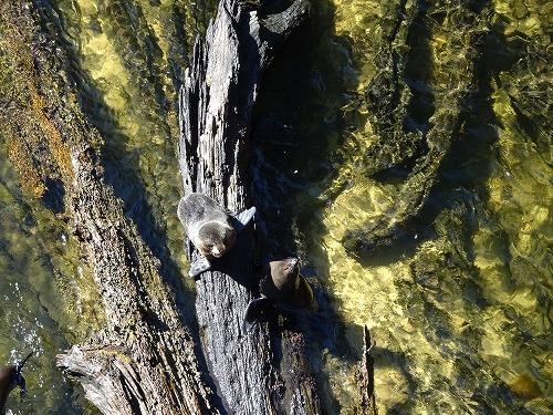 2017.10.3 水遊び in Abel Tasuman National Park