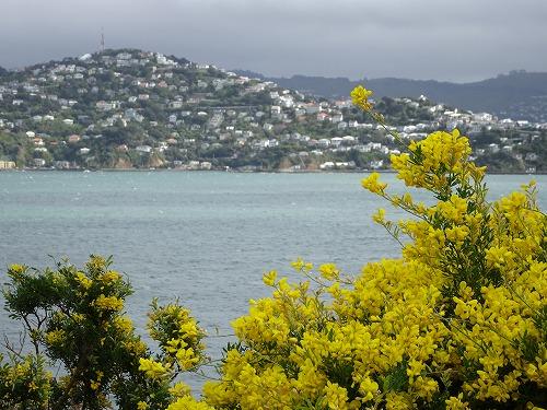 2017.9.29 Wellingtonの町