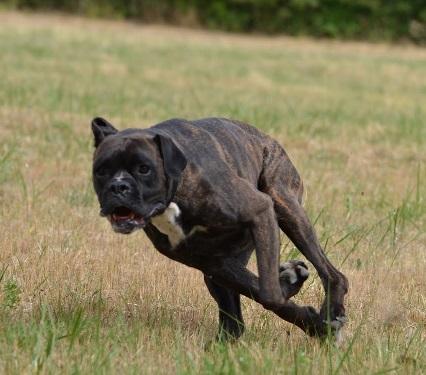 Les effets de l'activité physique sur le comportement du chien