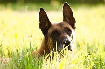 Un chasseur tue un chien de randonneurs qu'il avait pris pour un loup