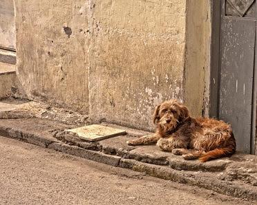 Relations entres les chiens et les humains