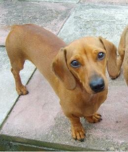 Choisir son chien...conscient ou inconscient ?