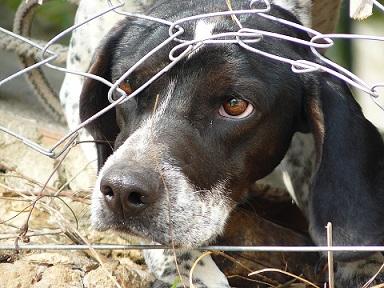 Le syndrome de privation du chien