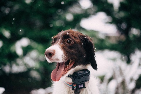 Clôture anti-fugue pour chiens : effets sur le chien