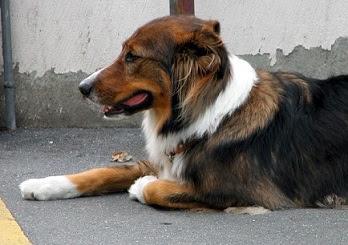 Aboiement ou vocalisation du chien