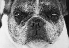 Race de chien, une marchandise