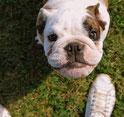 Michel Chanton et la haine de l'éducateur canin