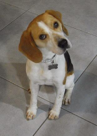 Témoignage Éducation canine dressage Charente Maritime (15)