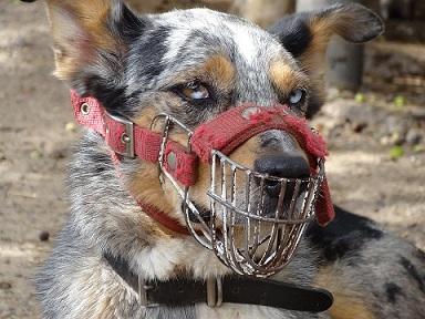 Choisir une muselière pour son chien