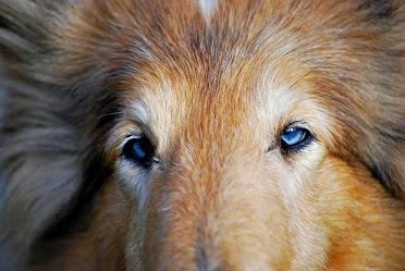 Méthode miroir chez le chien