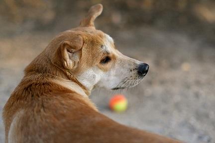 A quoi servent les moustaches du chien