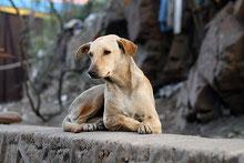 Politique du chien unique en Chine