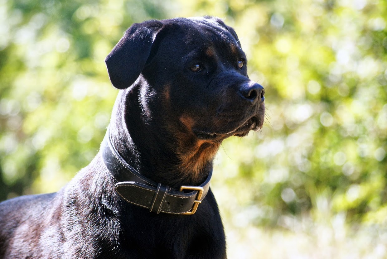 Troubles Du Comportement Du Chien Educateur Canin Charente