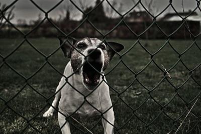 Mon chien est tres dominant ?