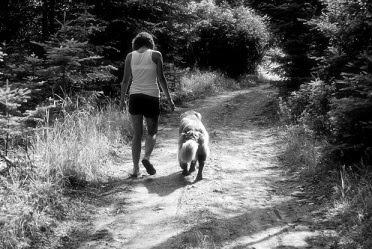 Les émotions de chiens caressés par une personne connue ou inconnue