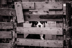 Comment punir un chien ? Punir intelligemment son chien ?
