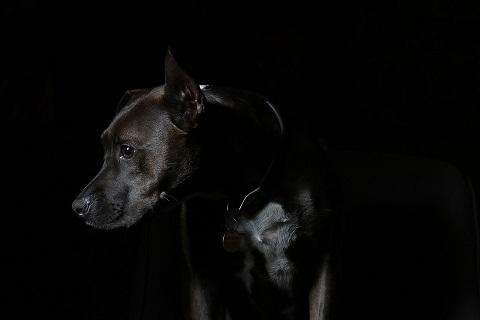 Les pensées du chien sous IRM