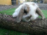 cercados para conejos en madrid